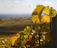 Vinmark.Alsace
