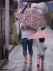 Paraplylandet. Japan